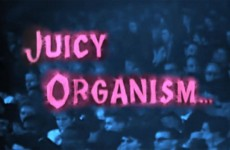 Juicy Organism, the Trio +